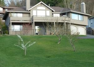 Spring Lawn Maintenance